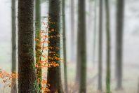 thumb_trees.jpg - 6.48 kB