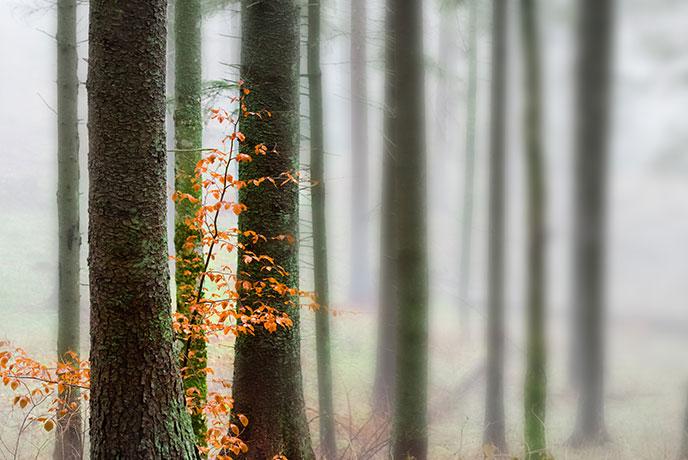trees.jpg - 80.86 kB
